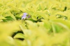 En purpurfärgad blomma är blommande bland gul sidabakgrund Arkivbild
