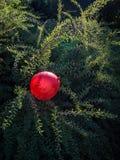 En röd ballong som fångas i en rengöringsduk av grönska arkivbilder