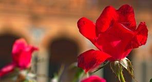 En röd blomma i staden fotografering för bildbyråer