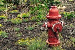 En röd brandpost Royaltyfria Bilder