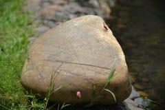 En röd drakefluga som kopplar av på en stor sten Royaltyfria Foton
