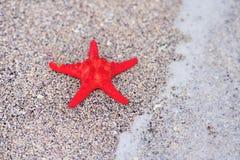 En röd havsstjärna Royaltyfria Foton