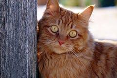 En röd katt Arkivfoton