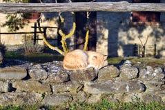 En röd kattsömn i solen Arkivbilder