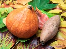 En röd kurisquash och en sötpotatis på sidor royaltyfri foto