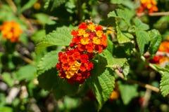 En röd och gul blomma på en solig dag arkivbild