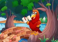 En röd papegoja som läser en bok Arkivfoto