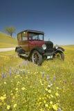 En rödbrun modell T som kör ner en scenisk väg som omges av vårblommor av av rutt 58, Shell Road, CA Arkivfoton