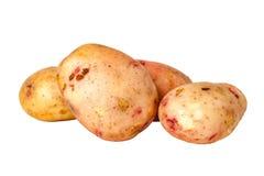 En rödbrun potatisIdaho potatis Royaltyfria Bilder