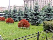 En rabatt med trädet och blommor Arkivfoton