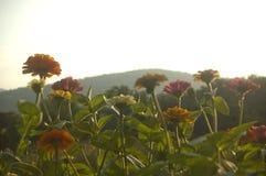 En rad av blommor på grunden av bergen Royaltyfri Foto