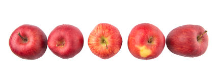 En rad av röda äpplen V Arkivfoto