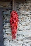 En rad av röda peppar Royaltyfri Bild