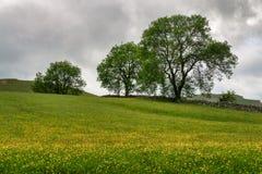 En rad av träd i en blomma fyllde den engelska ängen Royaltyfri Bild