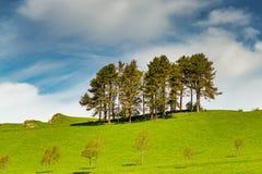 En rad av träd på en gräs- lutning Royaltyfri Foto