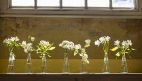 En rad av vita blommor på skärm Arkivbilder