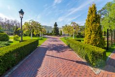 En rak bana i parkera läggas ut med tegelplattor med en kolonn, som växer på sidorna, klippte exakt, med en lykta royaltyfria bilder
