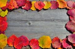 En ram av höstblad Arkivfoton