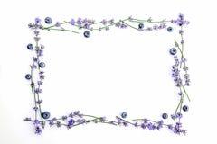 En ram av nya lavendelblommor och blåbär på en vit bakgrund Lavendel blommar, och blåbär förlöjligar upp kopiera avstånd Fotografering för Bildbyråer