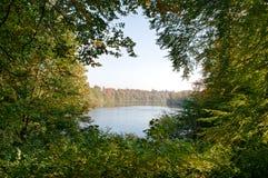 En ram av vegetation Royaltyfri Fotografi