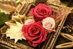 En ram och rosen Royaltyfri Bild