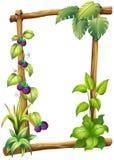 En ram som göras av trä med vinrankaväxter Arkivbild