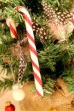 En randig röd och vit pinne för godisrotting som hänger i ett Chistmas träd royaltyfri foto