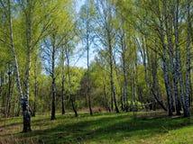 En ravin som omges av skogen Arkivfoto