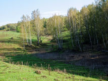 En ravin som omges av skogen Arkivbilder