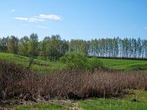 En ravin som omges av skogen Fotografering för Bildbyråer