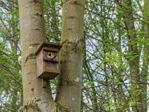En redeask på ett träd Royaltyfri Foto