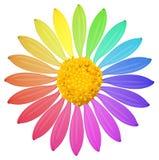 En regnbåge färgad blomma Royaltyfria Bilder