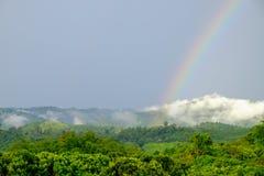 En regnbåge som uppstod efter regn, som uppstår på skogen på berget arkivfoto