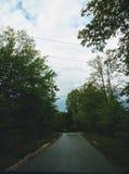 En regnig dag i skogen royaltyfria bilder