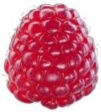 En rik hallonfrukt som isoleras på en vit royaltyfria foton