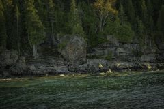En Rocky Coastline Lined With Trees royaltyfri bild