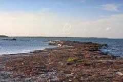 En Rocky Point i de Florida tangenterna Fotografering för Bildbyråer