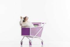 En rolig hamster med shoppingvagnen Fotografering för Bildbyråer