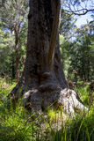 En rolig trädframsida i en dal av antikens folk Royaltyfri Bild
