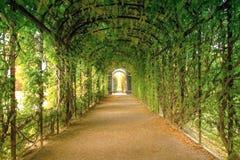 En romantisk grön tunnel i mitt av hösten Arkivfoto