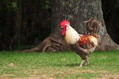 Roosteren på en parkera går Fotografering för Bildbyråer