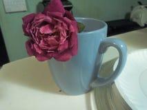 En ros i en kaffekopp Arkivfoton