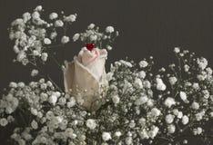 En ros med liten röd hjärta arkivfoton