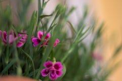 En rosa blomma royaltyfri bild