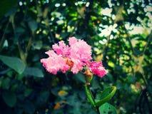 En rosa blomma med en gräsplan lämnar bakgrund Royaltyfri Fotografi