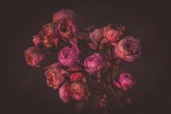 En rosa blomning i vintern med ett delikat sol- ljus royaltyfri bild
