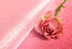 En rosa färgros på rosa bakgrund arkivbilder