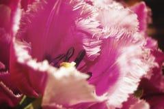 En rosa gladiolus Fotografering för Bildbyråer