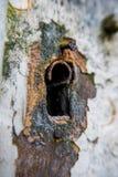 En rostig gammal nyckelhål på en vit dörr royaltyfri foto