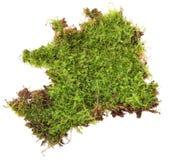 En rugge av grön mossa som isoleras på en vit bakgrund arkivfoto